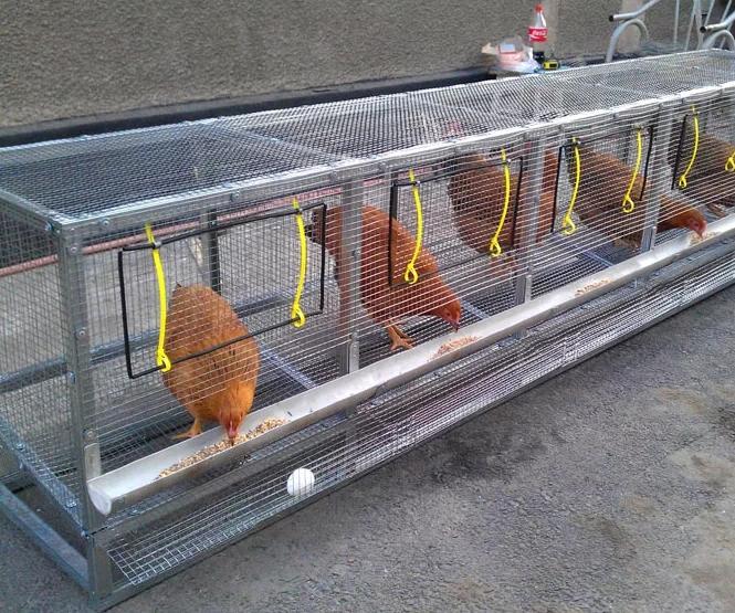 Клетки для курицы