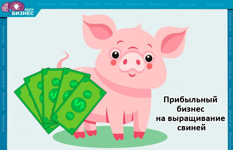 Прибыльный бизнес на выращивание свиней