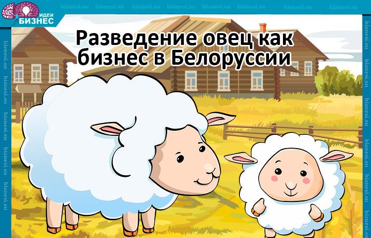 Разведение овец как бизнес в Белоруссии