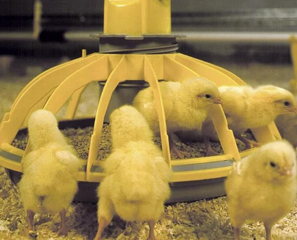 Устройства для кормления и поения птенцов