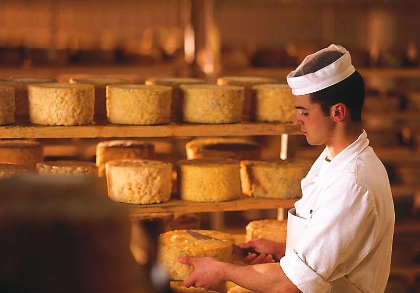 Бизнес идея по открытию собственной сыроварни
