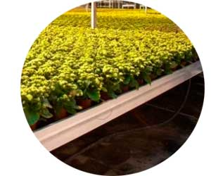 Выращивание и продажа зелени