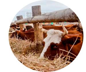 Открываем фермерское хозяйство