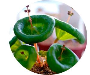 Выращивание необычных домашних цветов