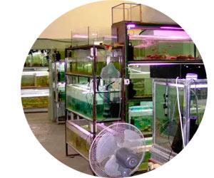 Выращивание раков в аквариуме