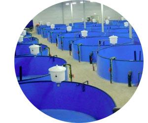 Выращивание раков в установке замкнутого водоснабжения