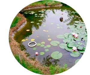 Выращивание в искусственном водоеме раков