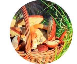 Заработок на сборе сезонного сырья – грибов и ягод