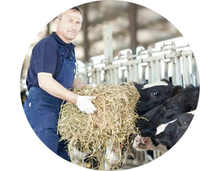 Поиск сотрудников на ферму